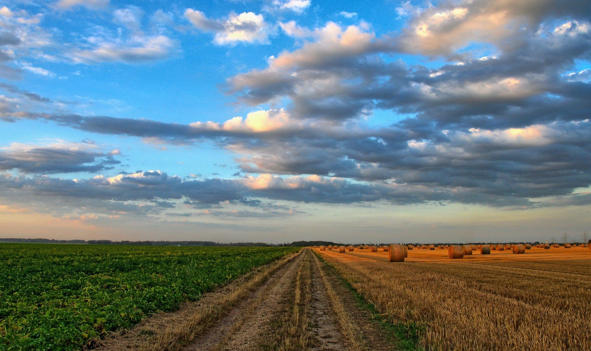 Coronavirus : quelles restrictions pour le monde agricole ?