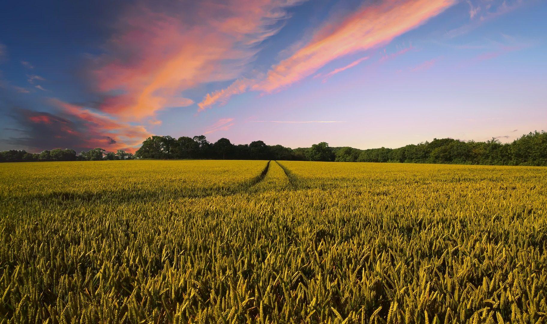 Impôts et MSA: les agriculteurs peuvent reporter le paiement des charges