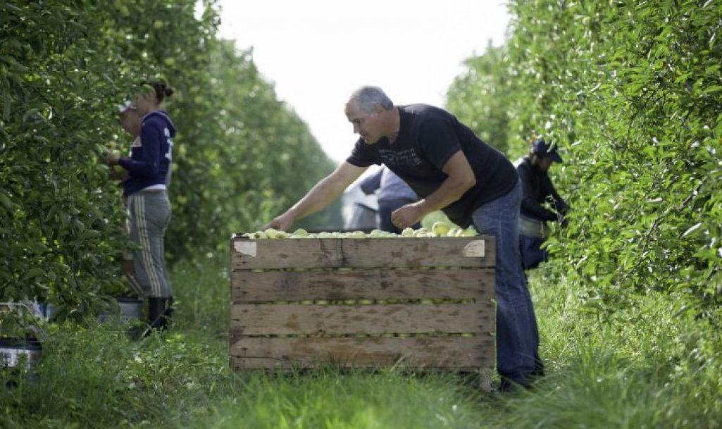 Covid-19 : Renforcer la force de travail de la chaîne agricole et agroalimentaire