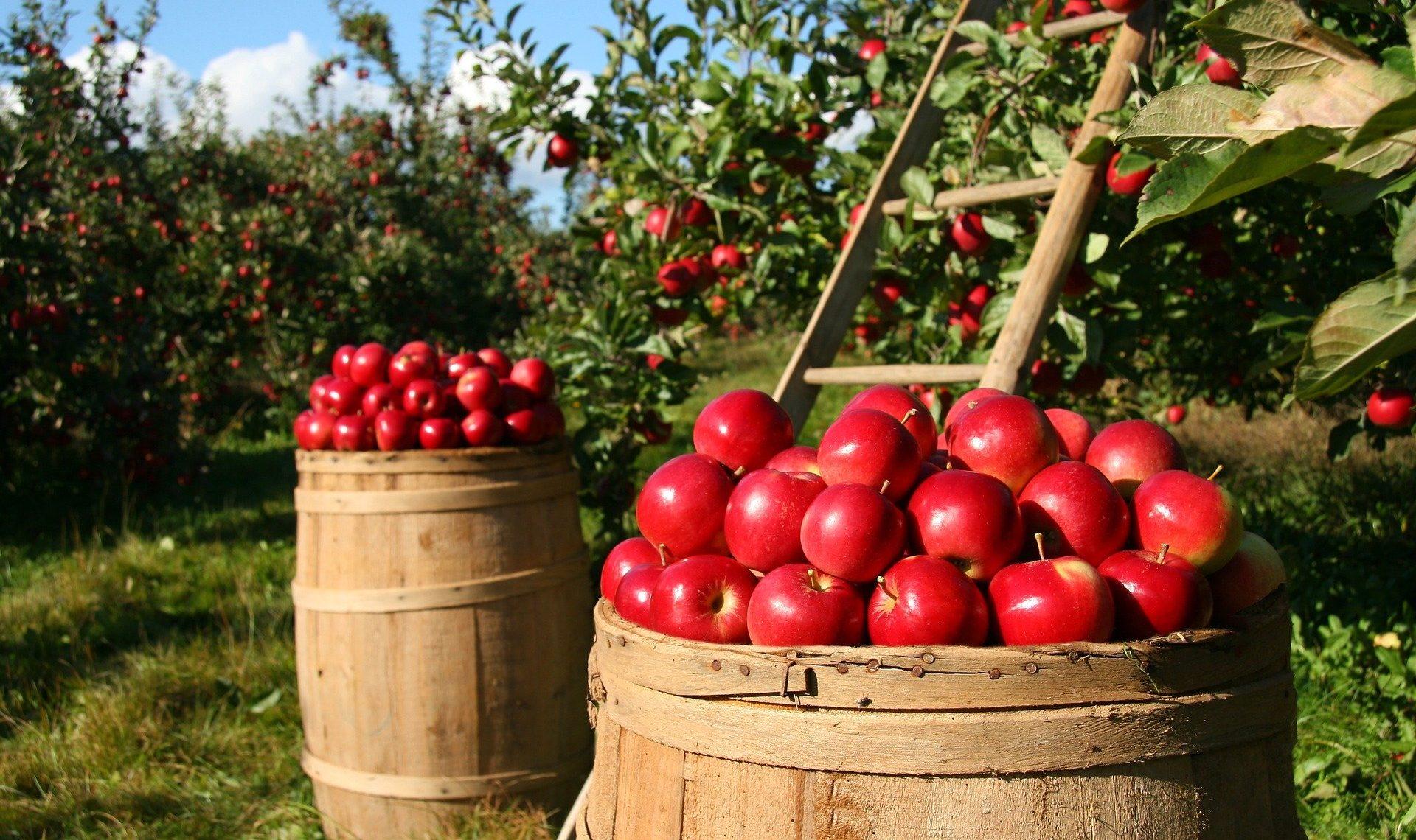 Covid-19 : entrée en vigueur du nouveau règlement européen sur l'agriculture bio reporté à 2022