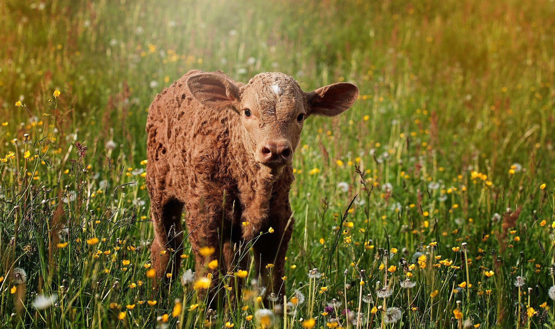 Un référent bien-être dans les élevages en 2022
